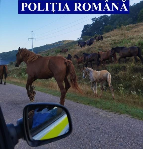 Caii lăsați nesupravegheați, în atenția polițiștilor
